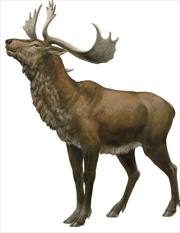大きな角を持った鹿のイラストがかっこいい