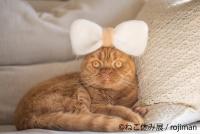 猫の合同写真&物販展「ねこ休み展」in 静岡パルコ