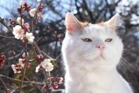 かご猫展~かご猫シロと季節のなかで~