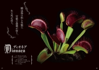 『官能植物』より