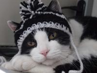 徒然猫屋。「オリジナルにゃんこ帽子」