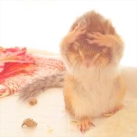 小動物の合同写真&物販展「まるっと小動物展」