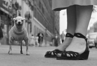 エリオット・アーウィット写真展『ウィット&ユーモア』