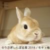 うさぎの合同写真&物販展「うさぎしんぼる展 2018」