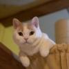 第8回 ねこまつり at 湯島~猫でつなぐ湯島のまち~