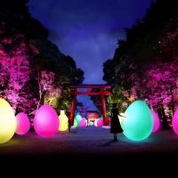 下鴨神社 糺の森の光の祭 Art by teamLab