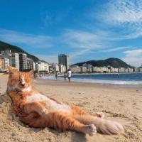 写真展 岩合光昭の世界ネコ歩き2