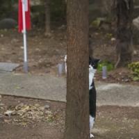 『残念すぎるネコ』サイン会&写真展