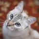 2月22日は「猫の日」! 猫イベントのレポート、ぜーんぶまとめました