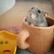 小さいけれど、かわいさは超巨大! ハムスター、シマリス、ハリネズミの愛らしさにクラクラ「まるっと小動物展」に行ってみた
