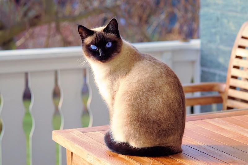 2月22日は「猫の日」! 猫イベントのレポー|レポート&ニュース ...