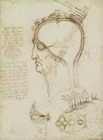 レオナルド・ダ・ヴィンチ「解剖手稿」より頭部断面、 脳と眼の結びつき部分 1490-92年頃 ウィンザー城王室コレクション所蔵 Royal Collection Trust/© Her Majesty Queen Elizabeth II 2018