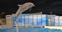 「おひとりさま水族館」~静かな夜の水族館に浸る~