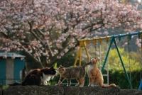 「海猫夢幻」~東京湾岸に生きる猫たちの記憶~