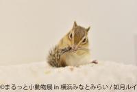 小動物の合同写真展&物販展「まるっと小動物展 in 横浜みなとみらい」