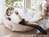猫の合同写真展&物販展「ねこ休み展 夏 2020」