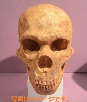 死者の日 Day of the Dead (Dia de los Muertos):メキシコ