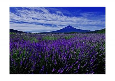 富士河口湖ハーブランタンまつり