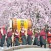 チャンバラ合戦×千本桜祭り