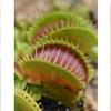 食虫植物のひみつ展