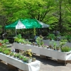 六甲高山植物園 初夏の高山植物展