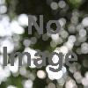 日本の木のイス展 ― くつろぎのデザイン・かぞくの空間 ―
