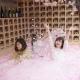 サクラに埋もれながら、佐賀の日本酒を楽しむ「SAKURA CHILL BAR」